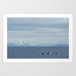 Killerwhales Art Print