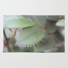 Dew drops on rose leaves Photography Rug