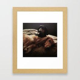 Two Dachshunds Framed Art Print