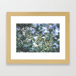 Winter Ivy Berries - Nature Photography Framed Art Print