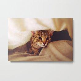 hunting cat Metal Print