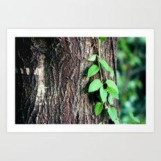 Wrinkles in Nature Art Print