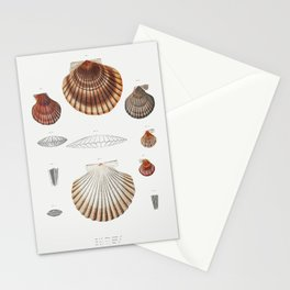 Clam shell varieties set  from Mollusca  Shells by Augustus Addison Gould Stationery Cards