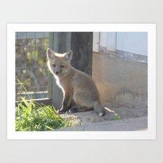 fox VII Art Print