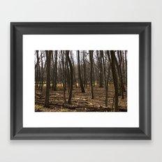 Forest Through the Trees Framed Art Print