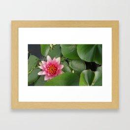 Lotus Flowe_pink1 Framed Art Print