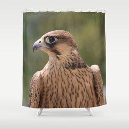 Falco peregrinus pelegrinoides  Shower Curtain