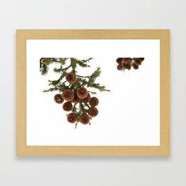 (Spruce or Fir) Cones Framed Art Print