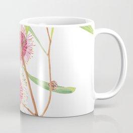 Pincushion Hakea (Hakea Laurina) watercolour; Australian flower Coffee Mug