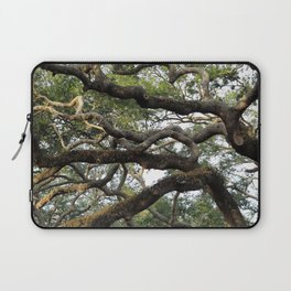 Live Oak Tree Laptop Sleeve