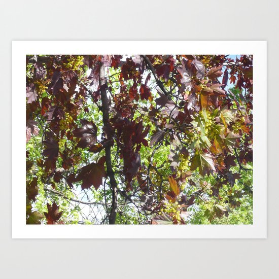 Autumn in spring Art Print