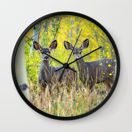 Double Take - Pair of Young Mule Deer Hiding in Autumn Aspens Wall Clock
