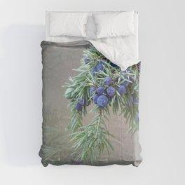 Juniper berries (seed cones) Comforters