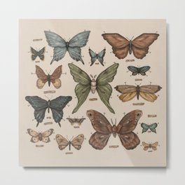 Butterflies and Moth Specimens Metal Print