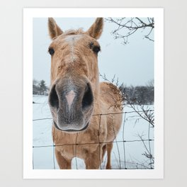 Horse Up-Close in the Snow Art Print