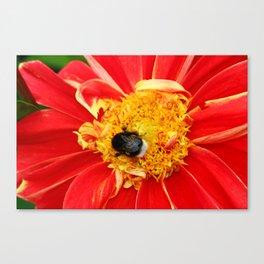 Bumble Bee On Dahlia Canvas Print