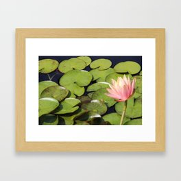Pretty in Pink Lily Framed Art Print