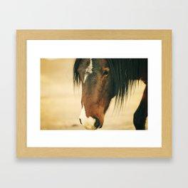Wild Mustang Framed Art Print