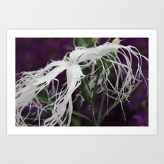 flower with white hair Art Print