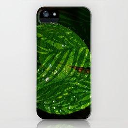 Leaves V2WL iPhone Case