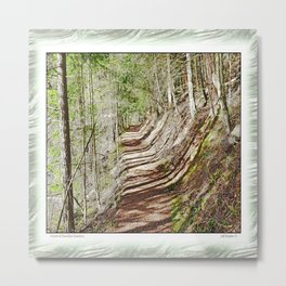 FOREST OF PARALLEL SHADOWS Metal Print