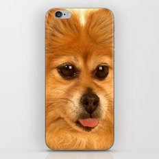 Pomeranian dog (slightly distorted like her personality) lol iPhone & iPod Skin