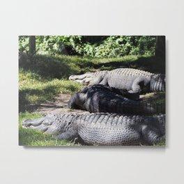 Lounging Gators Metal Print