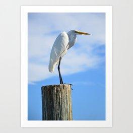 Perching White Egret Art Print