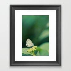 Holly Blue Framed Art Print