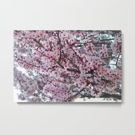 A Pink & Fragrant Spring Metal Print