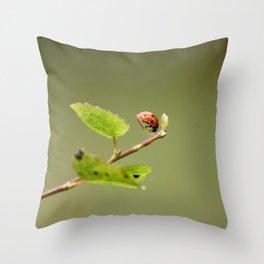 Ladybug Macrosphere Throw Pillow
