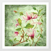 magnolia Art Prints featuring Magnolia by CatDesignz