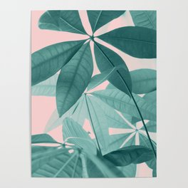 Pachira Aquatica #5 #foliage #decor #art #society6 Poster