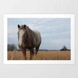 Happy Appy in the Pasture Art Print