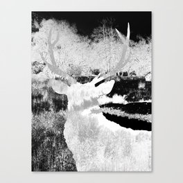 Stag in the shadows Canvas Print