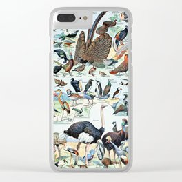 Vintage Illustration Bird Chart I Clear iPhone Case