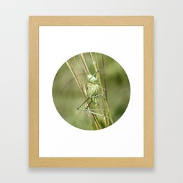 grasshopper Framed Art Print