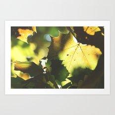 Fall Is In the Air II Art Print
