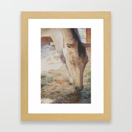 Horse Eating Hay In A Stable Framed Art Print