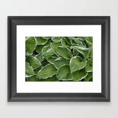 Hosta Leaves in the Rain Framed Art Print