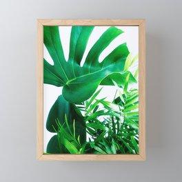 Tropical Display Framed Mini Art Print