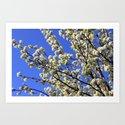 Blue Sky Pear Blossom by boysenberries3