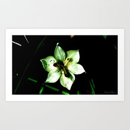 waterdrops on the flower Art Print