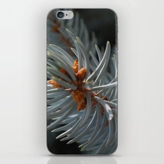 pining for you iPhone & iPod Skin