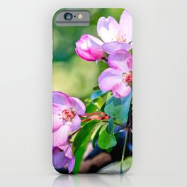 Bunch of pink crabapple flowers on a tree. Green background iPhone Case