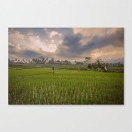 Bali rice field Canvas Print