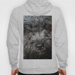 wet puppy portrait Hoody