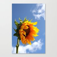 sunflower Canvas Prints featuring sunflower by Hannah