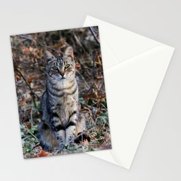 Sitting cat posing Stationery Cards