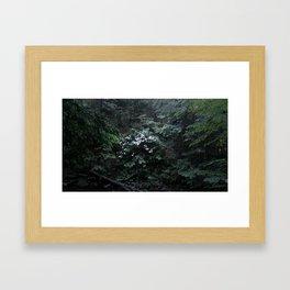 Mountain Laurels Framed Art Print